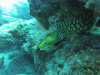 Lanzarote Juli 2018 - Tiger Moray