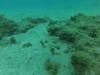 Zeepaardjes- Lanzarote Augustus 2016